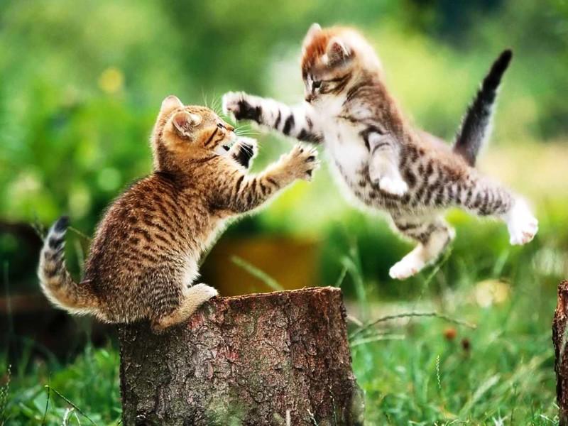 Кошки на охоте животные, коты