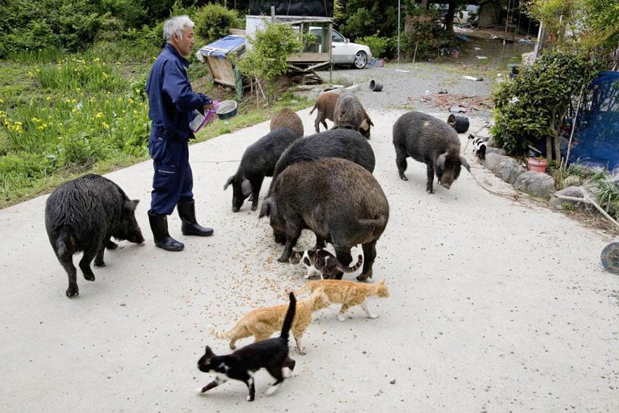 Японец вернулся в зараженную зону Фукусимы, чтобы кормить брошенных там животных