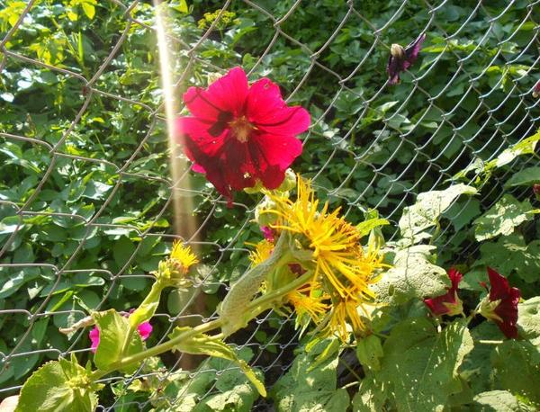 Экскурсия по огороду от Татьяны-садоводницы: июльская дача во всей её красе