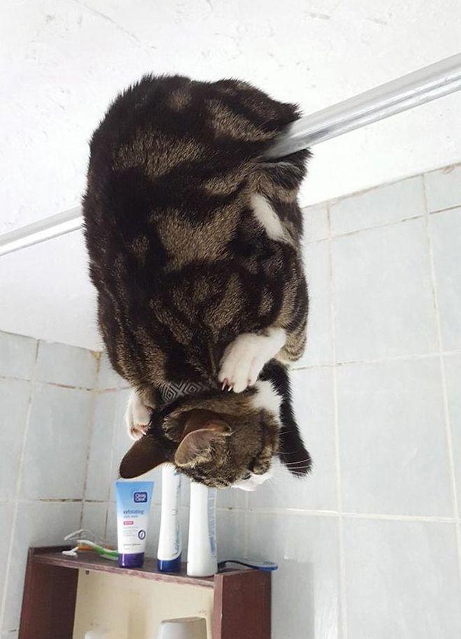 застала в ванную