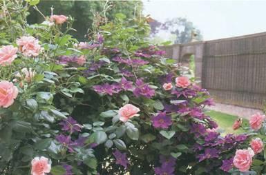 Розы и их спутники