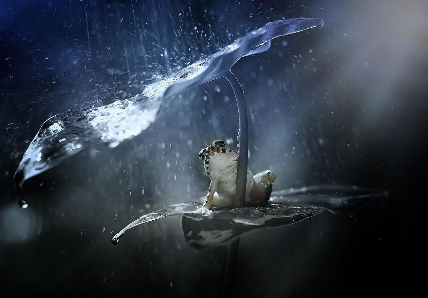 «Пережду, пожалуй» животные, зонтик