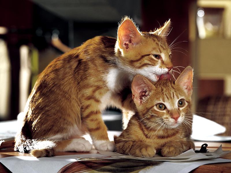 Наши любимые Кошки! 3-я часть.