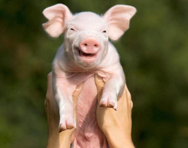 Животные — улыбаки: 10 фотографий, которые подарят вам хорошее настроение на весь день