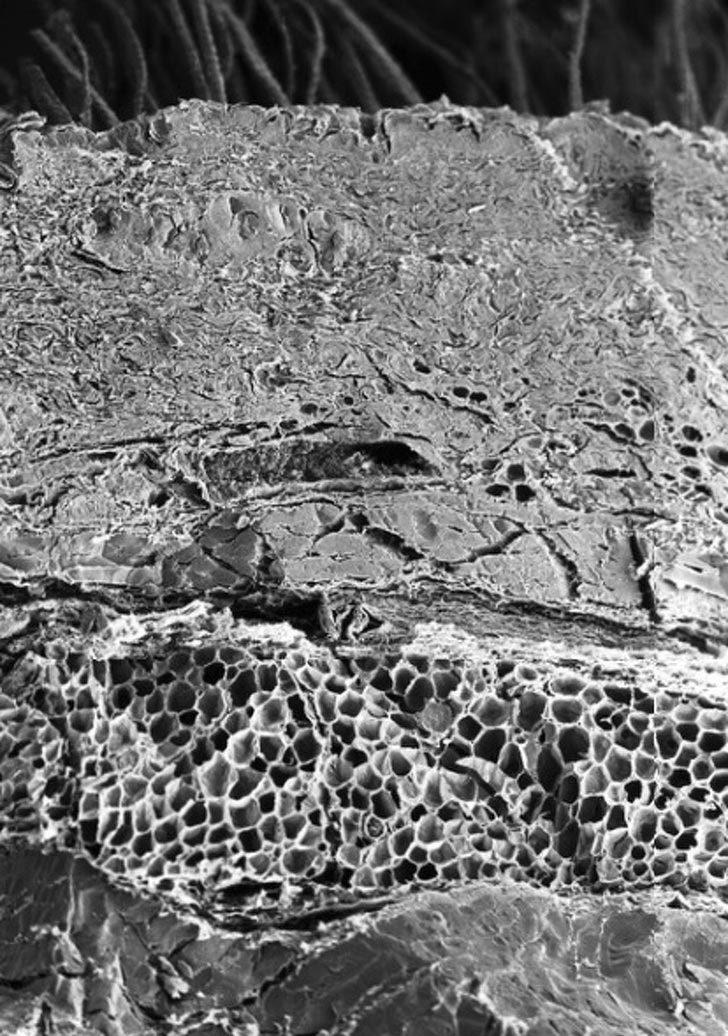 Наши органы под микроскопом