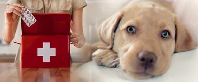 Аптечка для собаки - какие лекарства нужно иметь дома