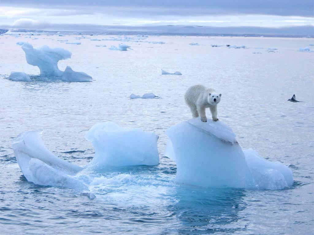 Температура в Арктике поднял…