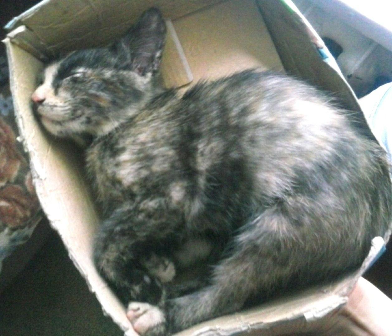 Такой любви и преданности я ни в одной кошке не видела!