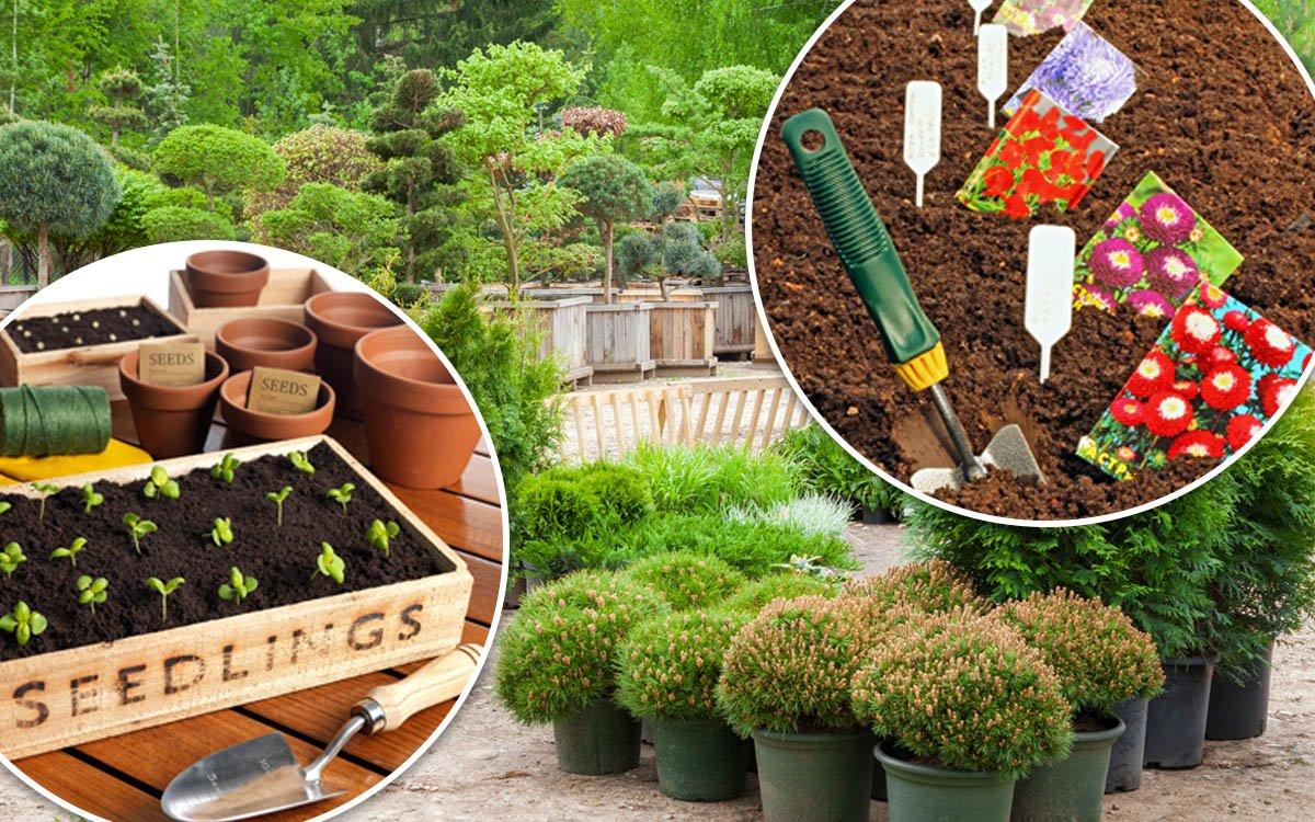 Как расшифровать иностранные надписи на посадочном материале и семенах