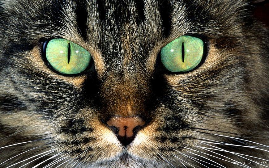 Красивейшие кошки