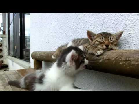 Кот, который спит