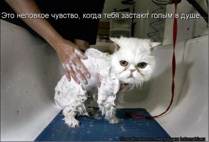 Коты, кошечки... и те, кто рядом...)))