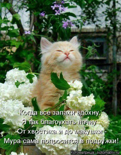 Уморительные котоматрицы - з…