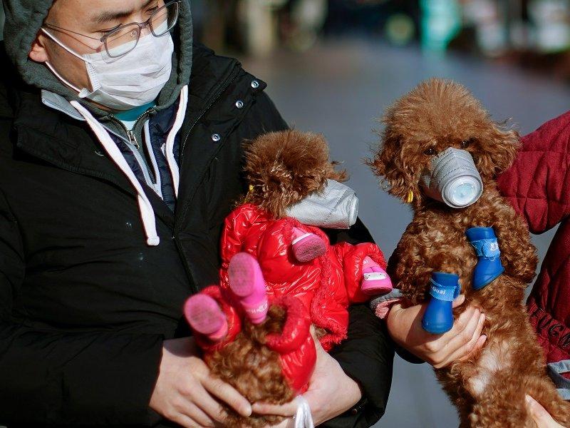 Ветеринары предупреждают, люди все-таки могут заразить коронавирусом домашних животных