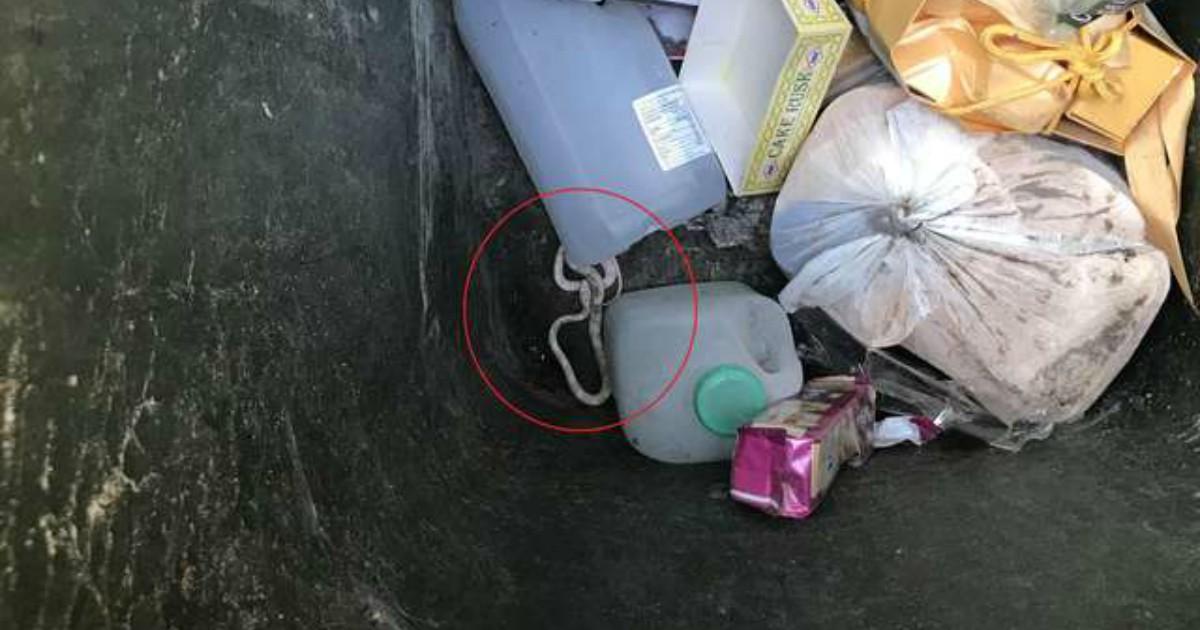 В мусорном баке что-то шевелилось! Это была маленькая змейка, которую никто не ожидал там найти