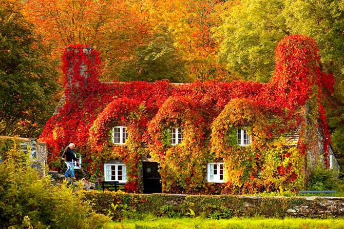 Осенние дома заросшие плющем