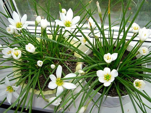 Лучшие цветы для дома: какие…