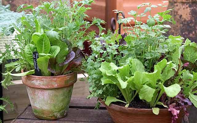 plants0115-21.jpg
