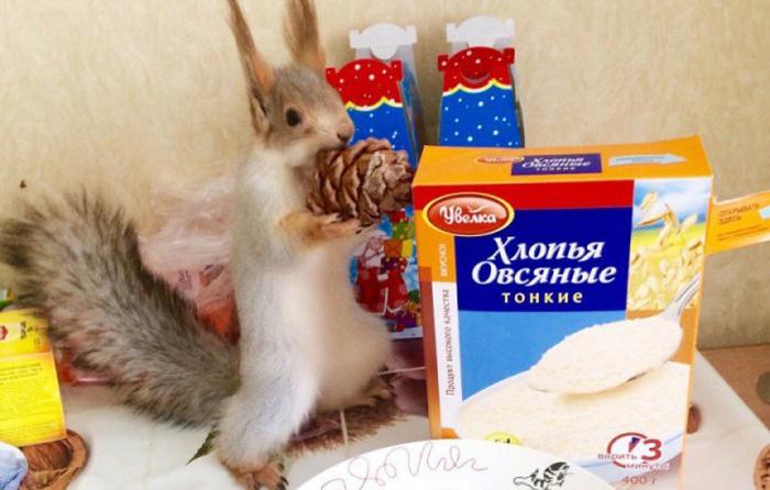 Белка Соня – звезда Новосибирска: Как девушка спасла дикое животное от верной гибели и прославилась