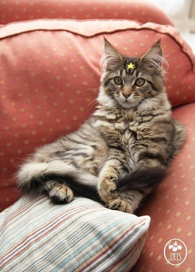 IrisandThula05 Как кошка Тула помогает девочке с аутизмом