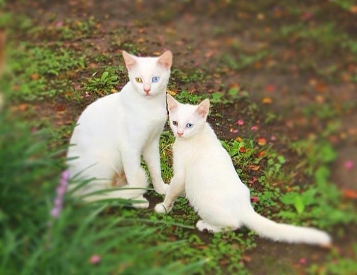11. Мать и дочь котенок, кошка