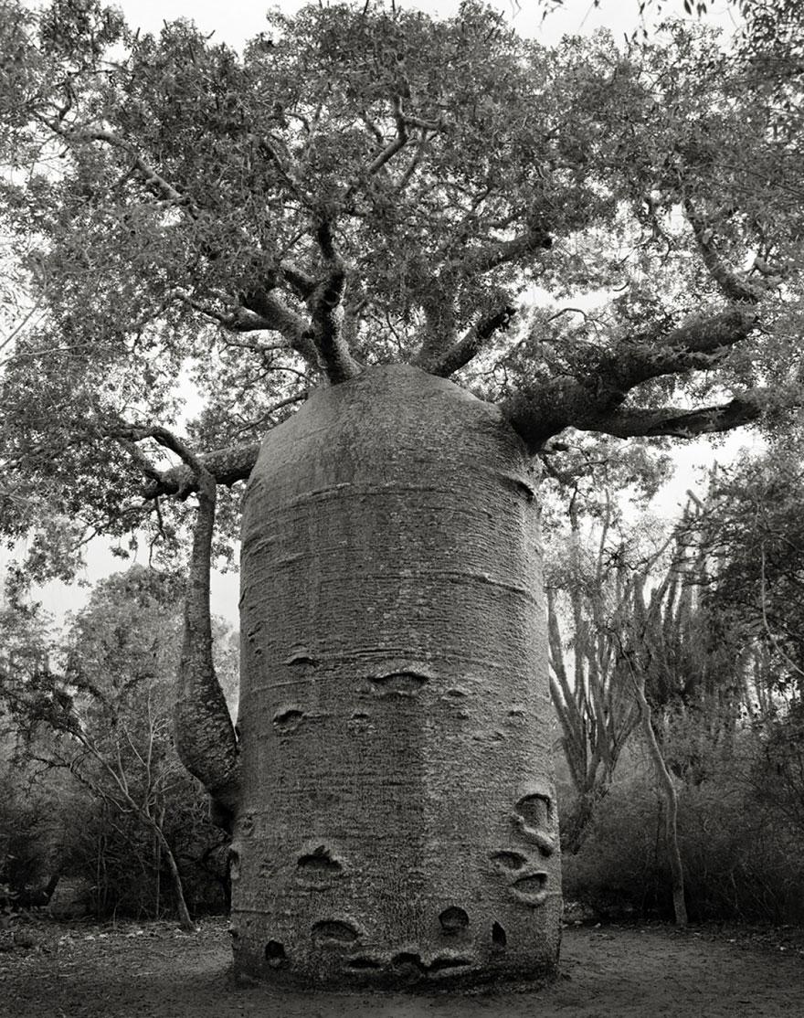 Деревья древние как мир в фотографиях из 14-летнего путешествия-11