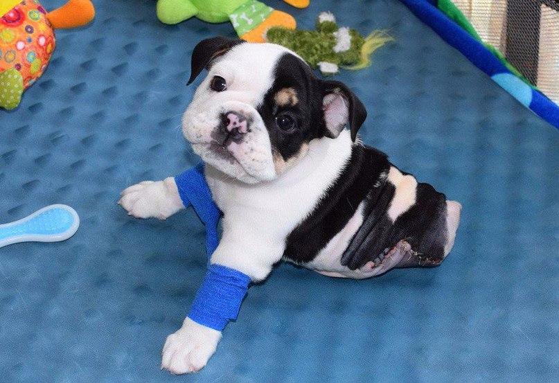 Бонсай — щенок, родившийся без половины тела