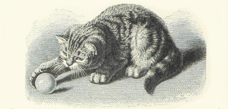 Причуды кошачьего поведения