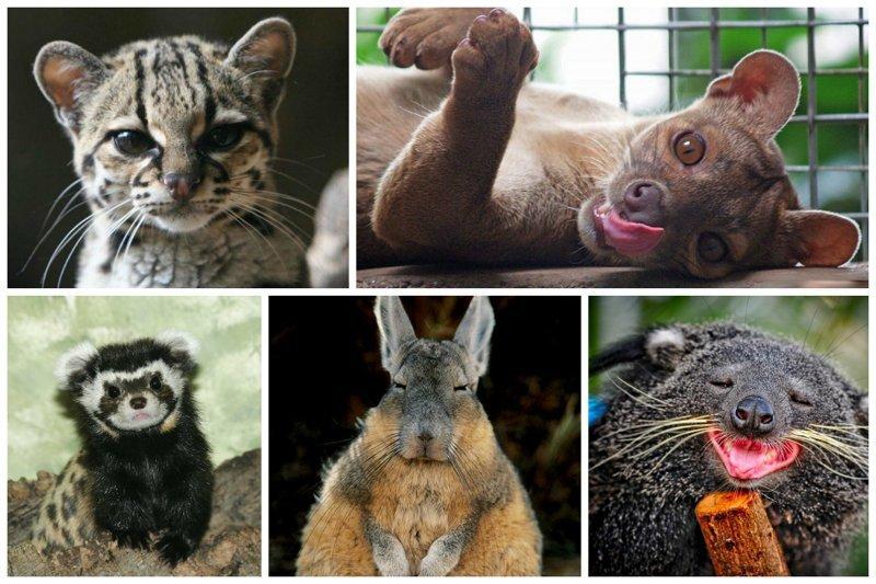 18 по-настоящему редких зверушек, о которых вы наверняка даже не слышали