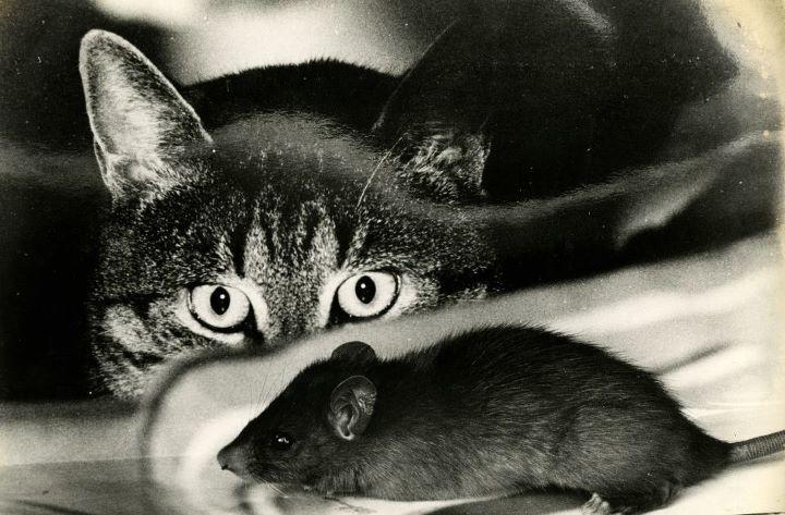 Как дед кота учил крыс ловить дед, кот, крыса