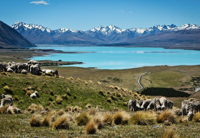 Южный остров, Новая Зеландия интересное, мир, остров, путешествия
