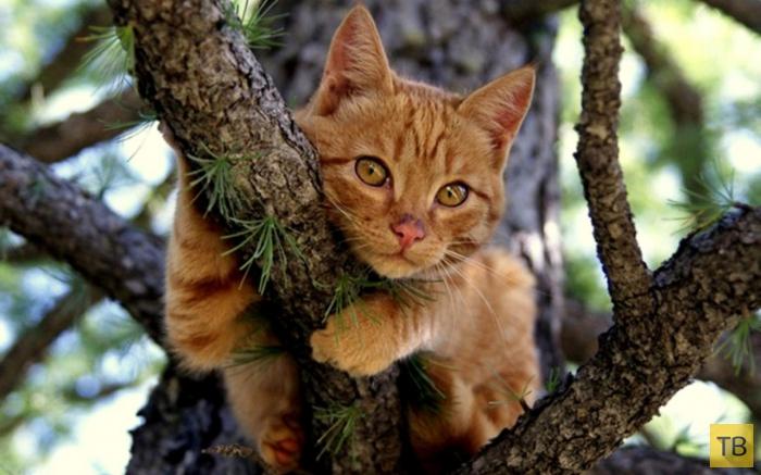 Про котов и психологию