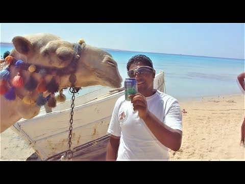 Смешные видео Приколы с животными 2018 Смешные собаки и кошки Ну очень смешные животные