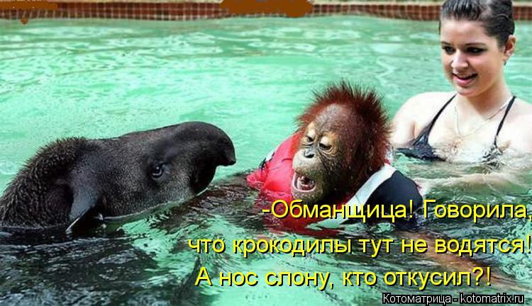 Котоматрица: -Обманщица! Говорила, что крокодилы тут не водятся! А нос слону, кто откусил?!