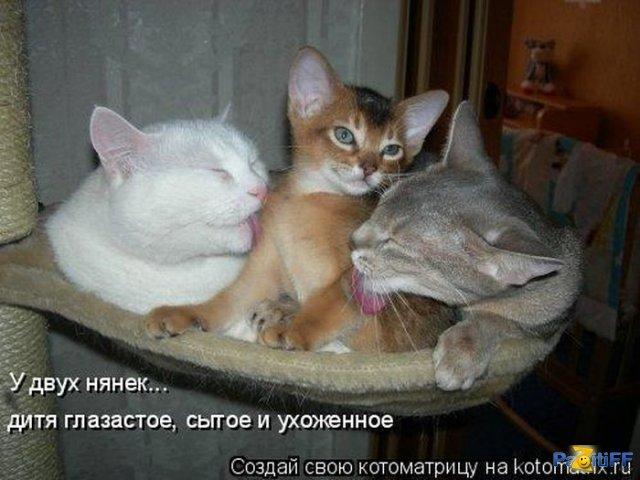 http://mtdata.ru/u25/photo164E/20658611871-0/original.jpg