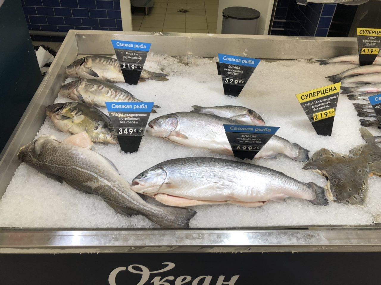 «Сказка про золотую рыбку»: эксперт о проблемах рыбной отрасли в России