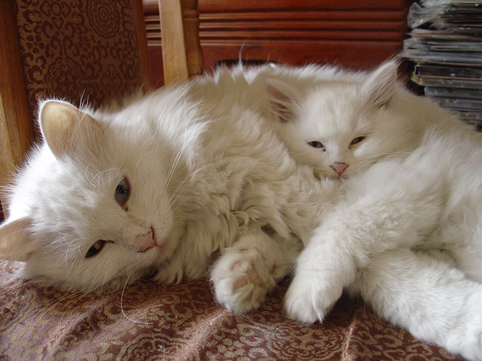 24. котенок, кошка