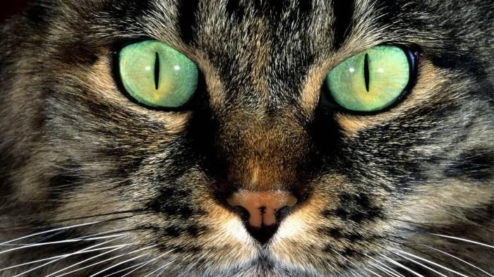 Вопросы и ответы о котах