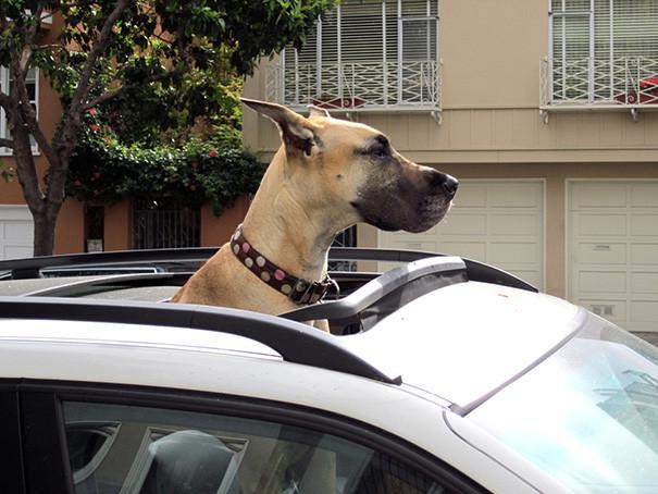 37. Поездка в машине размер, собака