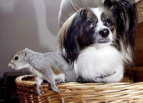 Неожиданная дружба собак с другими животными