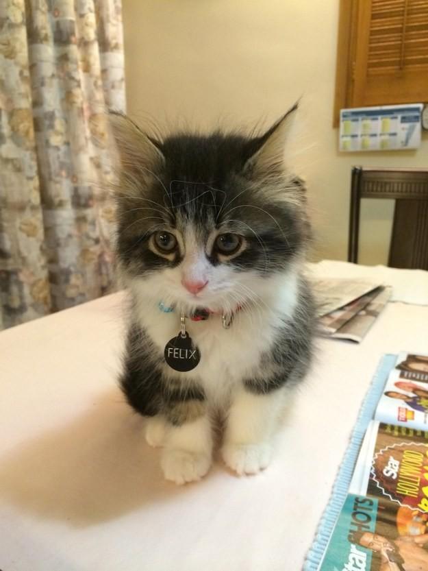 1. Взгляните на Феликса во всём его крохотном великолепии. животные, котята, милота