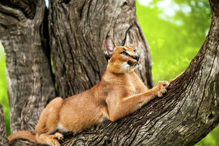 Усатые, полосатые, пятнистые и очень дорогие животные, коты