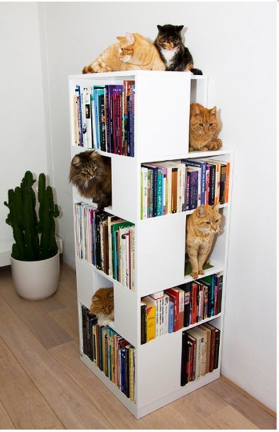 Полки для кошек в книжном стеллаже