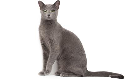 Самые дорогие породы кошек