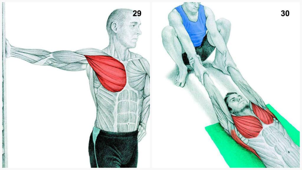 O que você desenha é, na verdade: Alongar os músculos em fotos