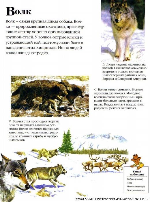 детские научно популярные тексты о животных случилось омской