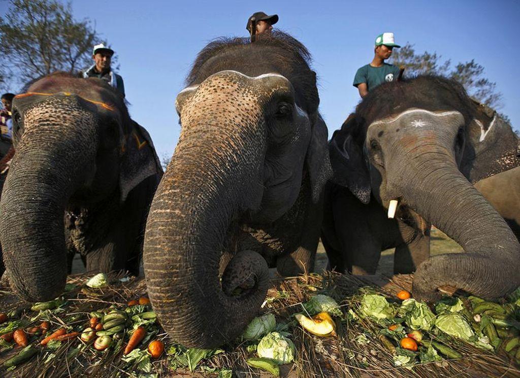 В Непале проходит 12-й слоновий конкурс красоты