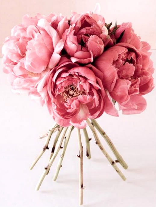 Цветок любви -ПИОН!!