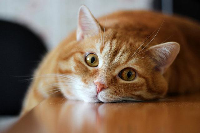 Записка кота для хозяйки