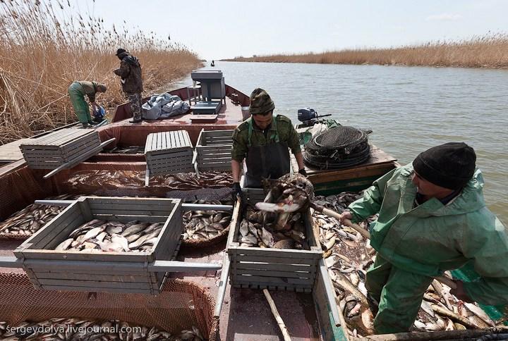 Как ловят рыбу в Астрахани